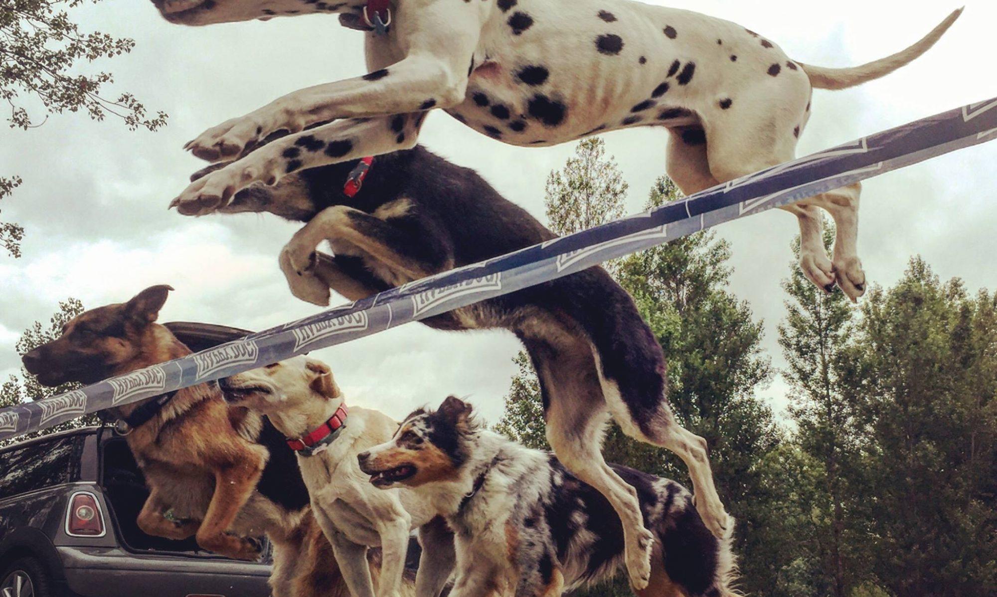 Sporting club canin de Villeneuve Tolosane